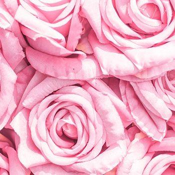 hidrolato-de-rosas